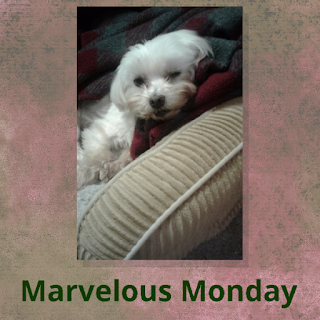 Lexi Rowell, #MarvelousMonday, On My Kindle Book Reviews