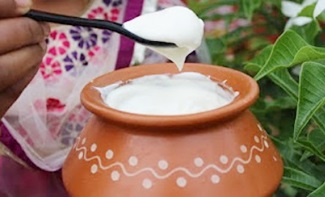 HOW TO MAKE THICK CURD AT HOME – HEALTHY VILLAGE FOOD