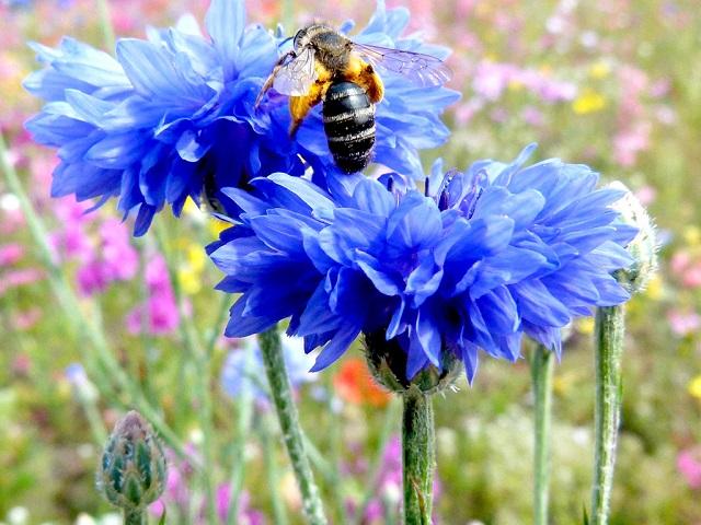 hoa màu tím thanh cúc