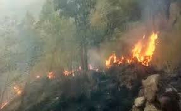 Korangini Forest Fire: Revelation by team member, Fire, News, Trending, Hospital, Treatment, Trapped, National