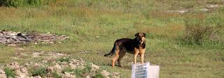 Rambo back on patrol