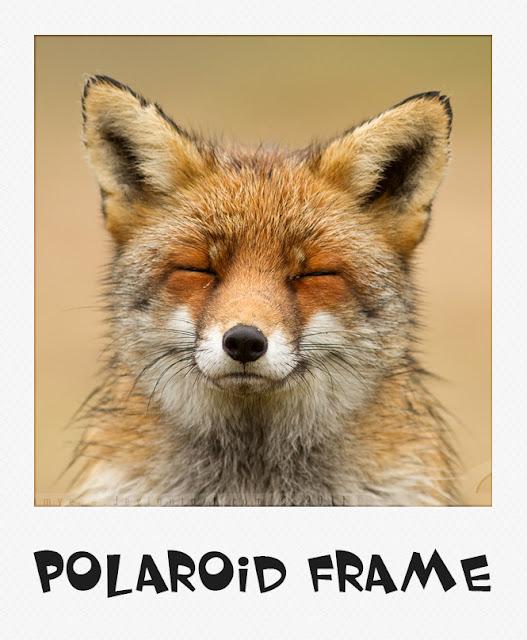 Бесплатные экшены для создания эффекта Polaroid