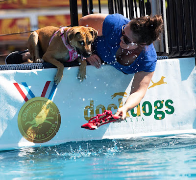 DockDogs competition of speed retrieve at the 2018 Brisbane Dog Lovers Show