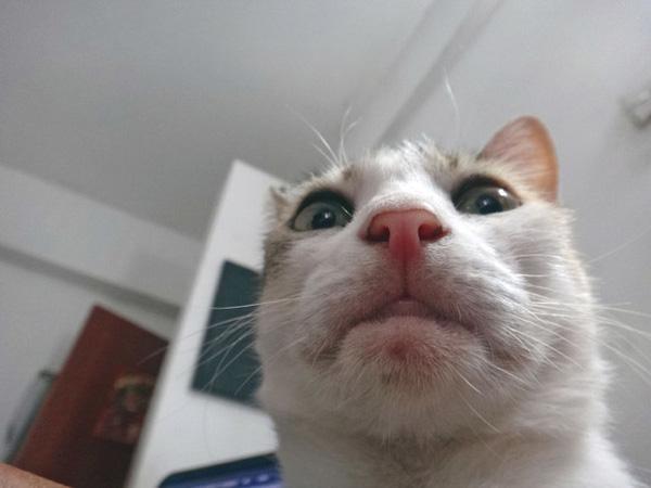 Tuyển tập ảnh selfie sành điệu của lũ mèo điệu chảy nước