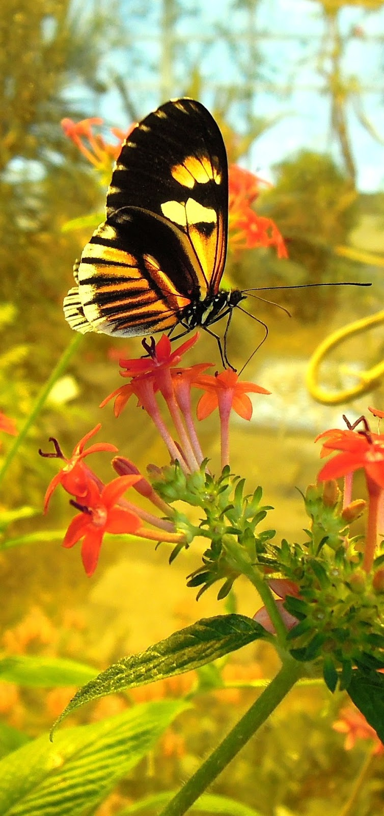 Colorful photo a yellowish black butterfly.