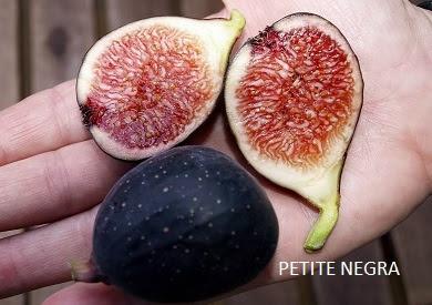 jual pohon tin karawang