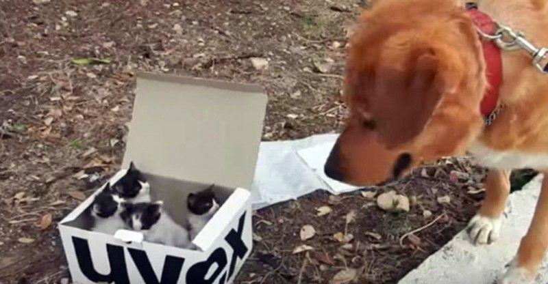 Σκύλος βρίσκει εγκαταλειμμένα γατάκια και γίνεται τέλειος μπαμπάς (βίντεο)