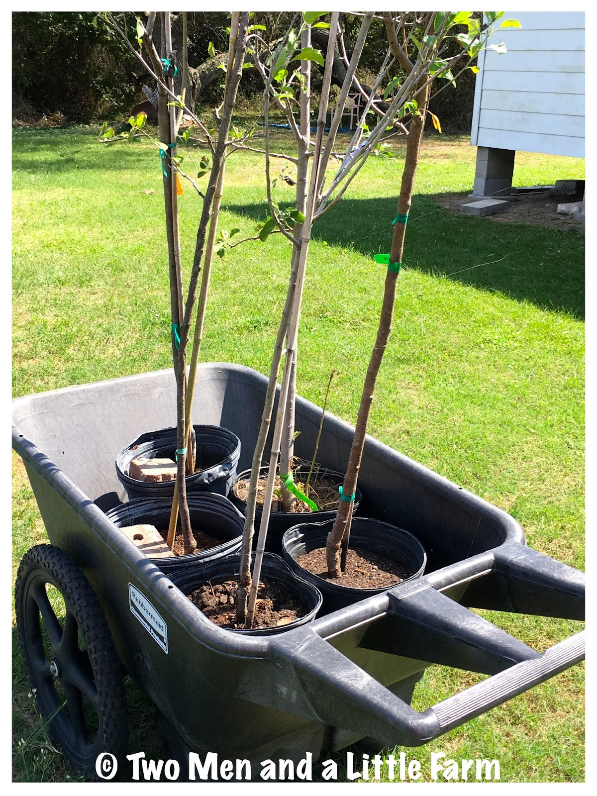 Two Men and a Little Farm RAISED BED FRUIT TREES PART ONE