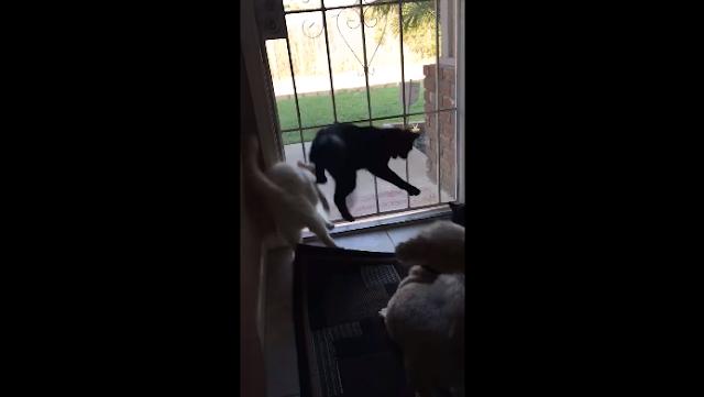 Lihat Reaksi Kucing Melompat Terkejut Karena Tiba-Tiba Ada Yang Datang Dari Belakang
