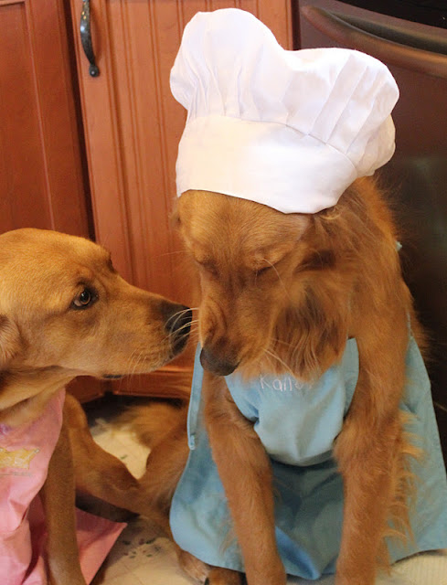golden retriever dogs in apron baking cookies