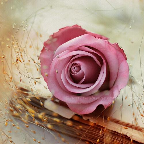 Um rosa sobre um livro
