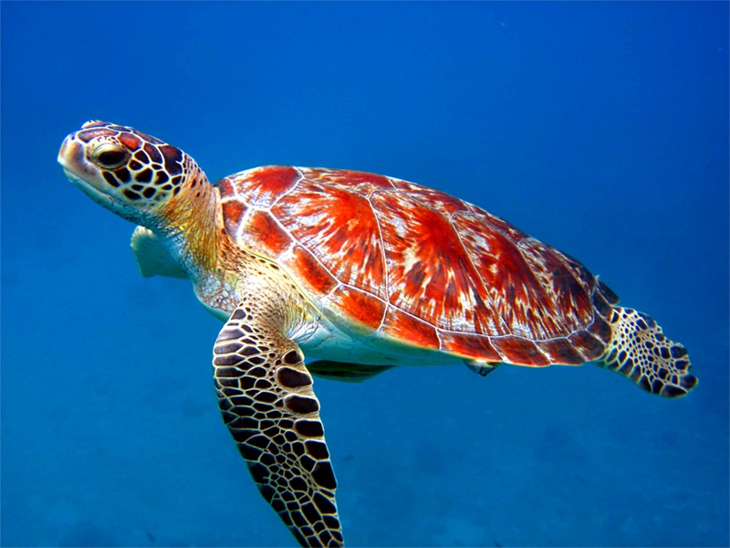 top 27 sea animals wallpapers in hd
