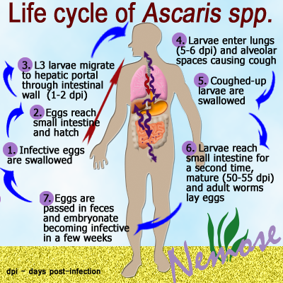 post ascariasis