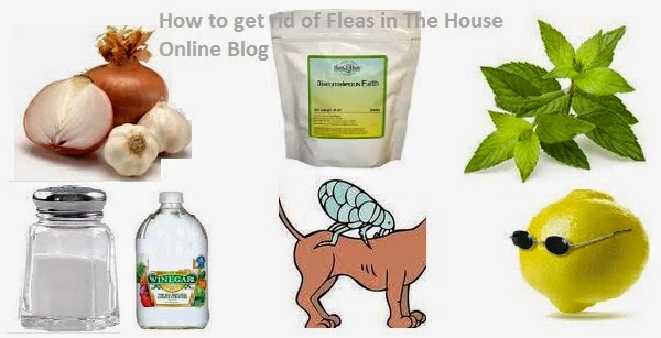 101 DIY home remedies to get rid of fleas naturally completely in house, on dogs and cats