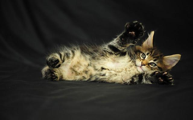 Kat aan het relaxen
