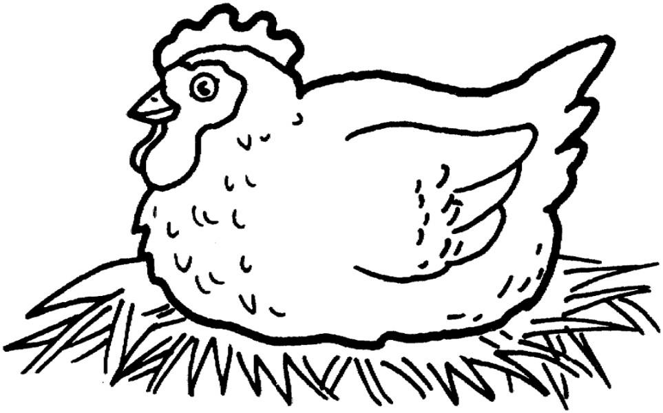 Gambar Mewarnai Ayam Terbaru   gambarcoloring