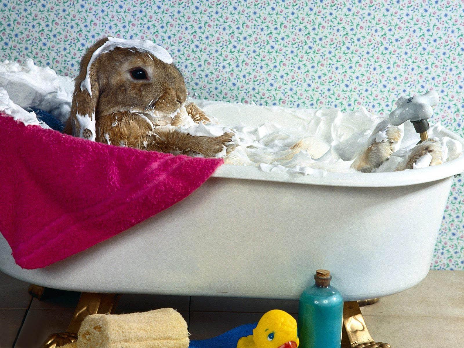 bureaublad achtergrond met wit konijn met hangoren