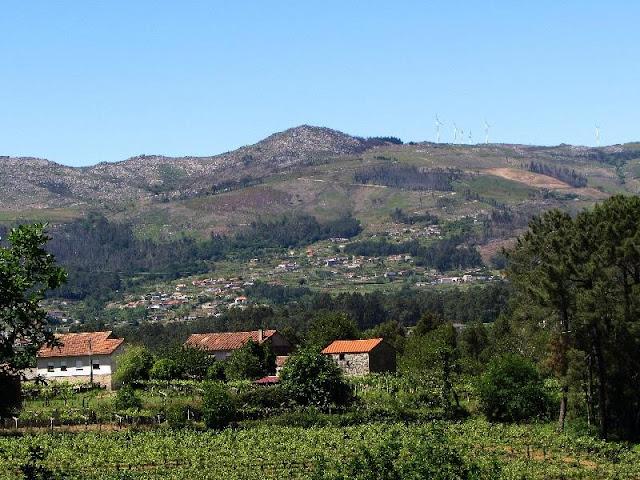 paisagem rural em meio a plantações de vinhas