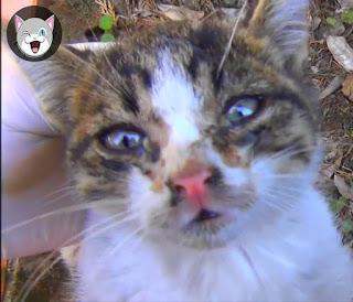 حلاوة تبني قطط من الشوارع قصة حقيقية مؤثرة جدا