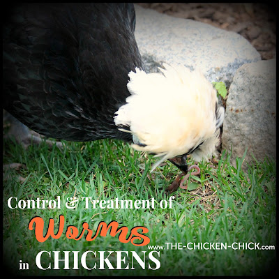 Control & Treatment of Worms in Chickens including medication dosage information.