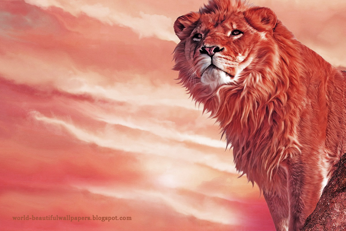 Beautiful Wallpapers: lion-wallpaper