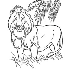 The American Lion Coloring Pages