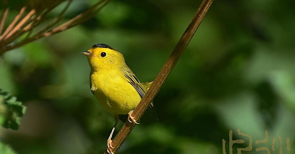 Oregon Backyard Birds, etc.: Picture Perfect
