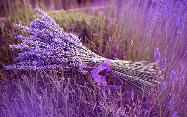 Paarse lavendel