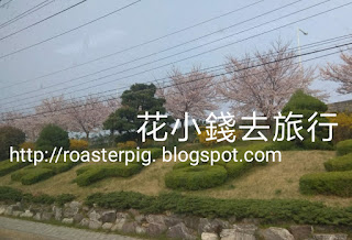 釜山洛東櫻花路