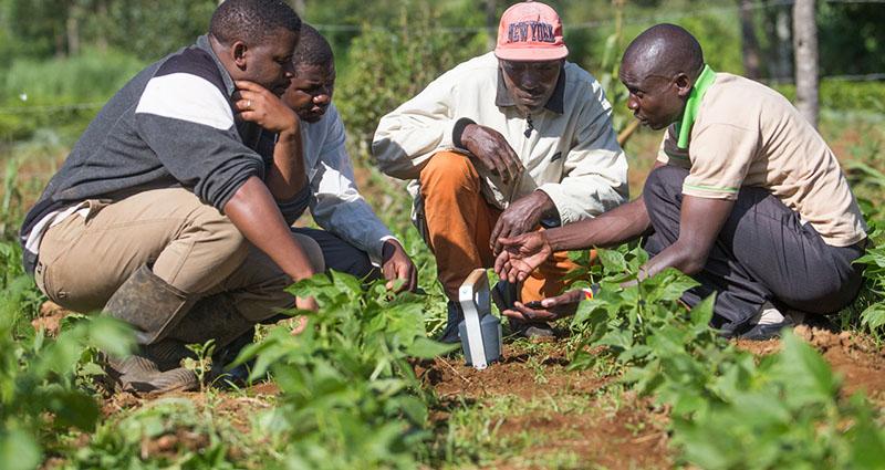 Африканские фермеры делают экспресс-анализ почвы