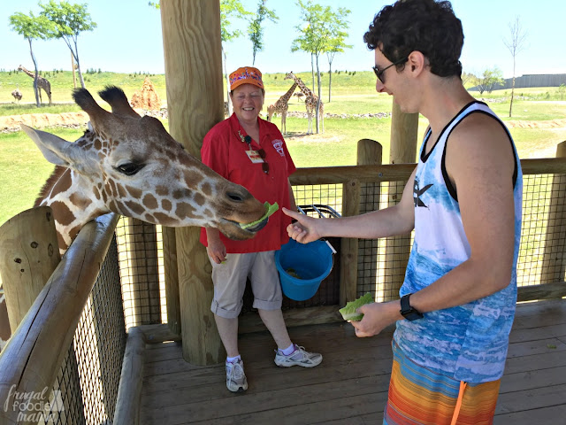 The highlight of our visit to the Columbus Zoo & Aquarium was getting to feed the giraffes. For just $3 a pop, you can walk up and feed a giraffe a handful of leafy greens.