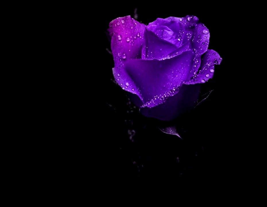 Flowers Darkness Wallpaper