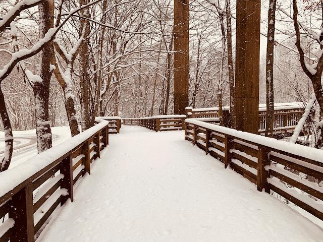 奧入瀨溪步道雪景