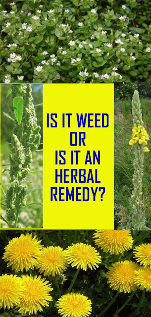 IS IT WEED OR IS IT AN HERBAL REMEDY?