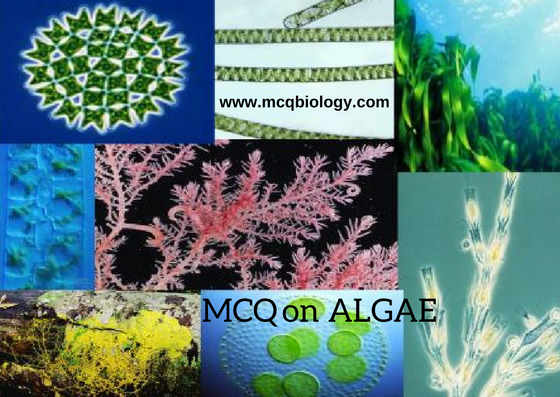 MCQ on Algae