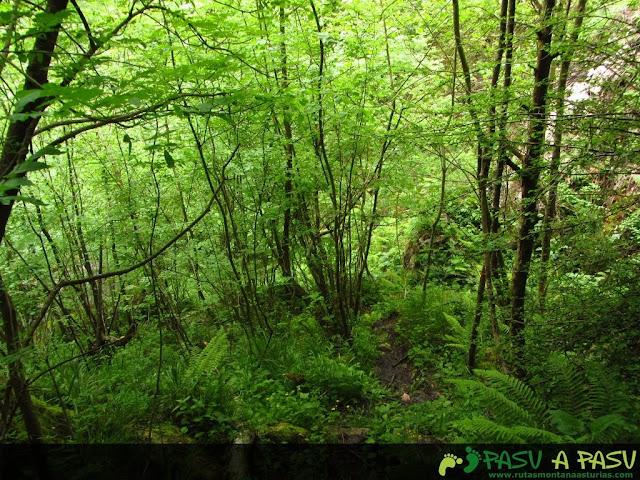 Bosque en la bajada al Oyu la Madre