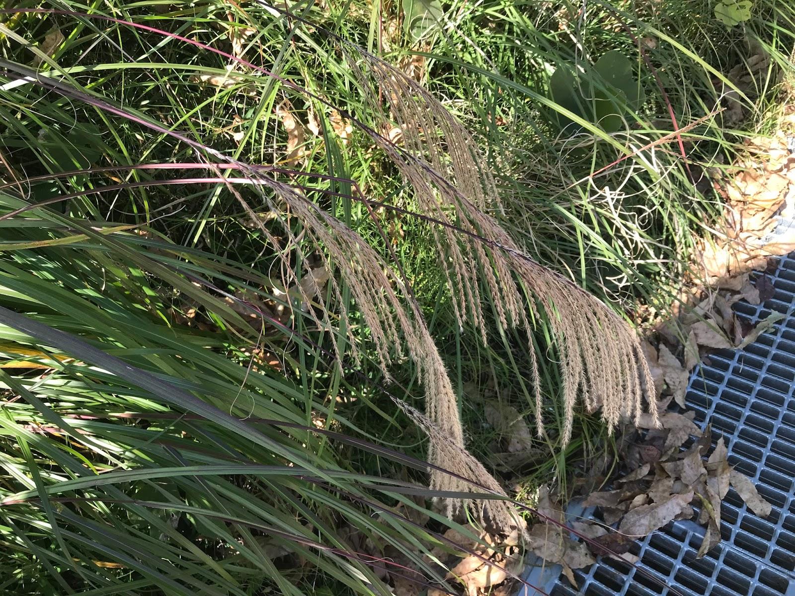 清教学園中高等学校植物ブログ