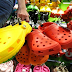 It's About Time To Throw Away Those Crocks-Like Shoes, Here's Why!