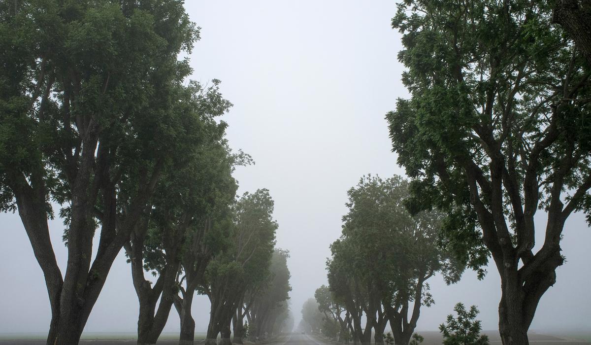 Tree Him Void And Seasons