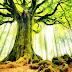 """Chuyện của một tù binh: """"Nếu anh có thể sống, hãy quay lại thăm cái cây này"""""""
