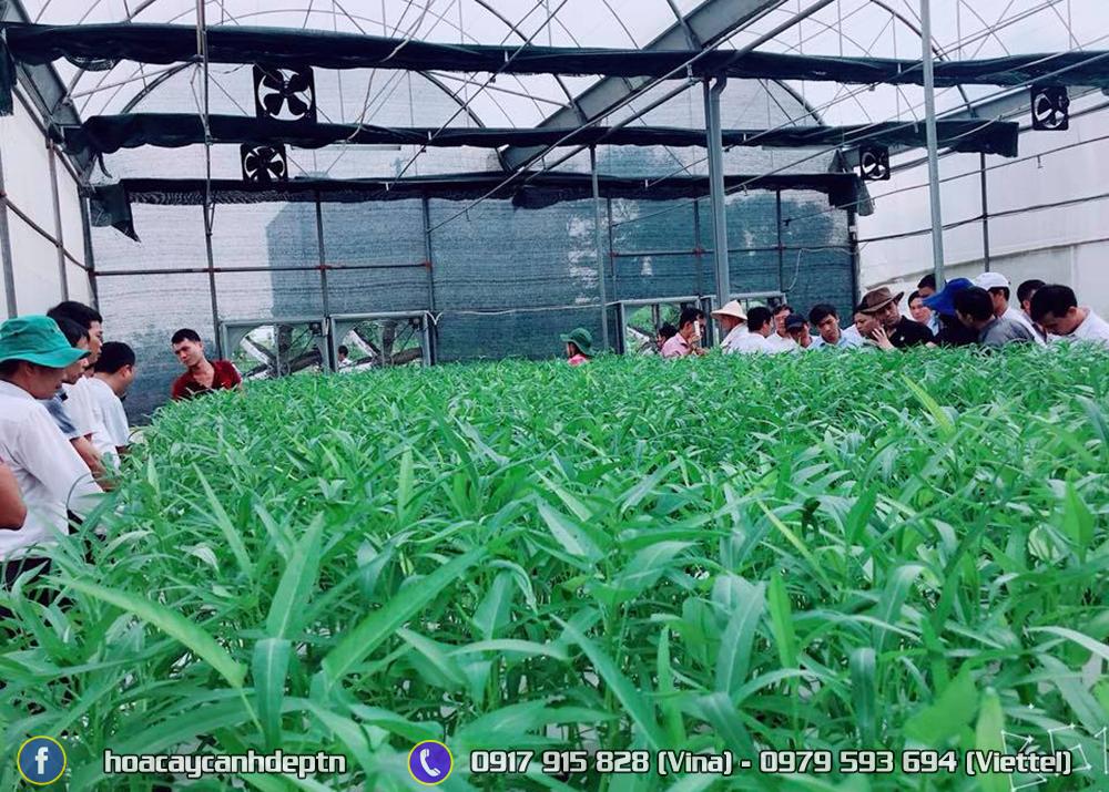 Nhà màng trồng rau tại Trường Đại học Nông Lâm Thái Nguyên