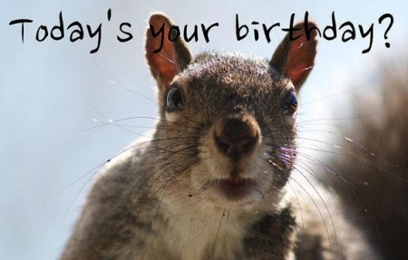 funny happy birthday images and quotes