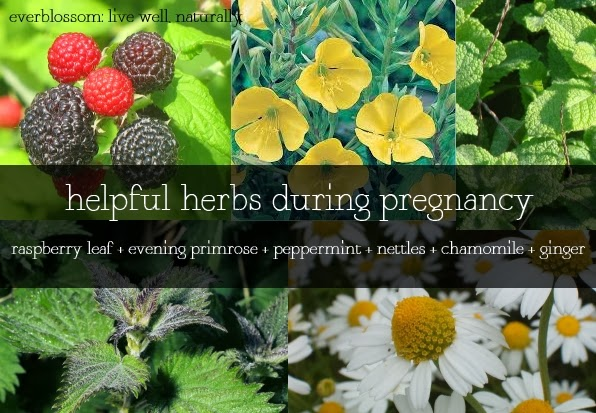 herbs to take while pregnant
