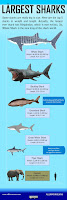 http://www.allfiveoceans.com/p/largest-sharks.html