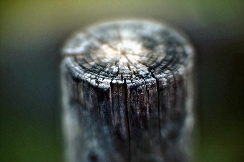 Aus dem Fotoarchiv (20) – Zaunpfosten freigestellt