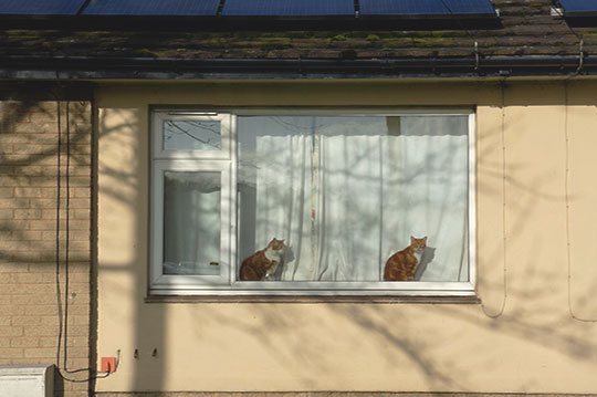urban photography, two cats in a window, urban photo, urban photography, documentary, documentary photography, Sam Freek, photographer, photo art,