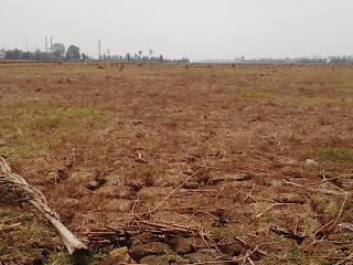 Katanya Selama 3 Bulan Petani Cilamaya Terlantar,Ini Penyebabnya