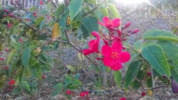 Flores Palmetum Tenerife