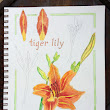 5 variations on a daylily