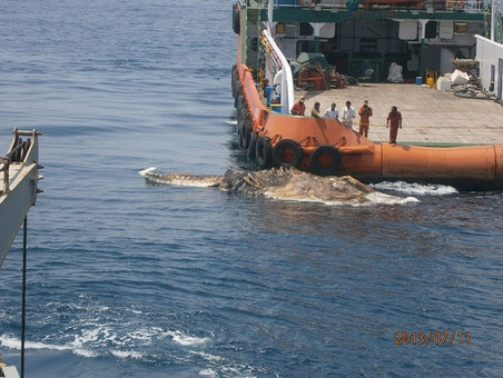 Shocking gigantic creature was found floating in the sea, what these sailors did was shocking!